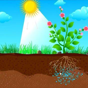 سوپرجاذب کشاورزی
